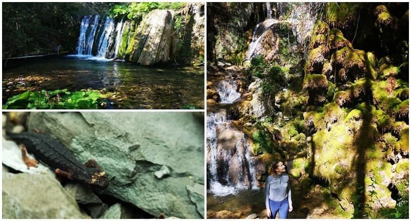 """Read more about the article Cineto Romano (RM), """"La Cascata grande di Rioscuro"""""""